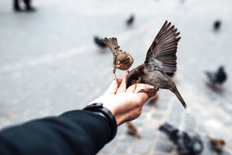 Low angle view of hand holding bird flying against blurred background
