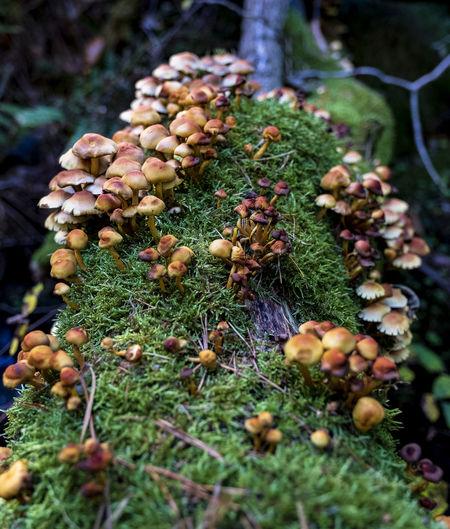 mushrooms on