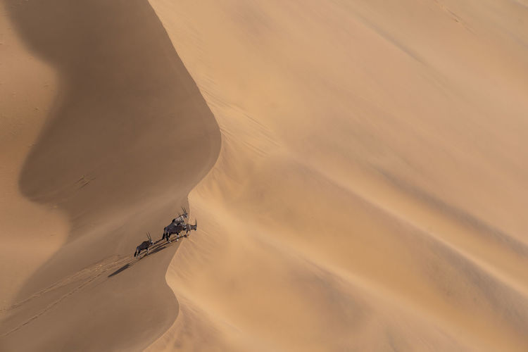 High angle view of person riding in desert
