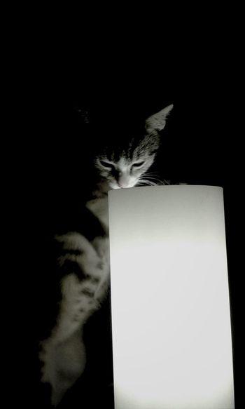 ohne worte Miauw Cute Cats Cat Katzen<3 Katzenfoto Cat Lovers Cat♡ Miau *-*