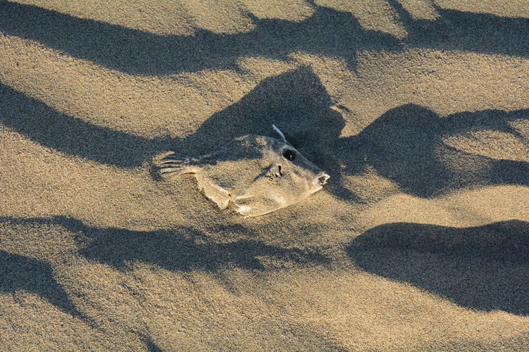 Shadow of fish on sand
