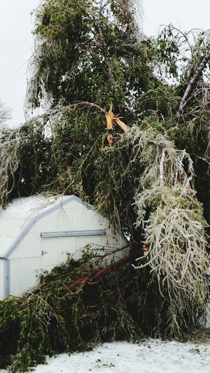 It's Cold Outside Ice Ice Baby Ice Storm Oklahoma Tree_collection  Trees Damages