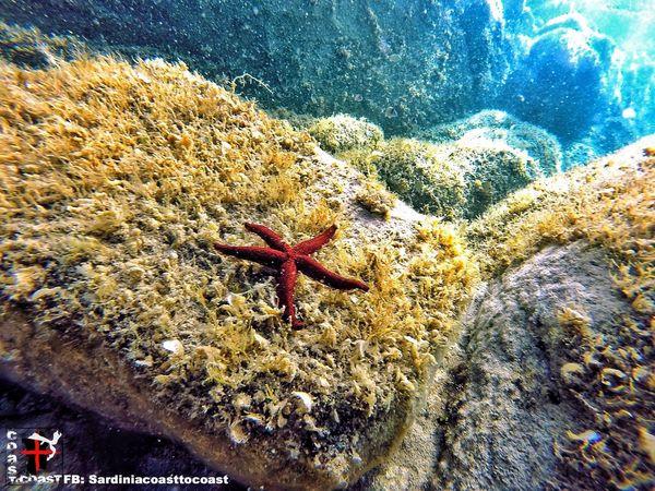Underwater Amazing Amazing View Sea Water Summer Sardiniacoasttocoast Gopro Sardinia