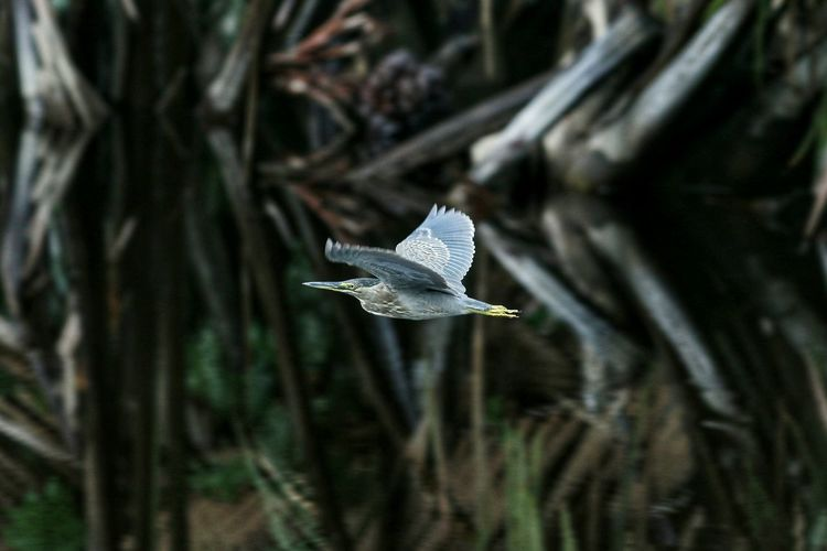 Close-up of a bird flying