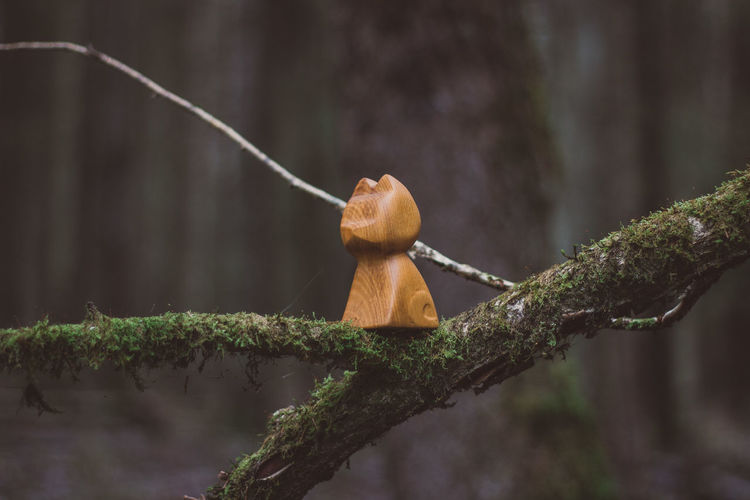 Forest Nature Wood Wood - Material Wooden Toy Toys Tree Cat Wooden Cat Moss Craft Crafts Handmade Animal Wildlife Animal Themes One Animal Plant Animal Animals In The Wild Branch No People Focus On Foreground Monkey Day Primate Outdoors Mammal Vertebrate Land Ape