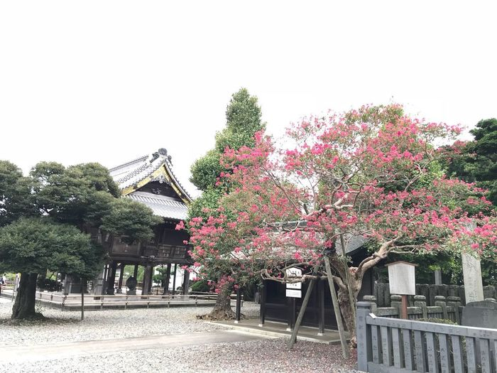 Japanese temple @ Narita 成田山 Japan Plant Built Structure Architecture Tree Growth Sky Nature Building Exterior Day No People Clear Sky Building Outdoors Beauty In Nature Fence Barrier Boundary House Flower Freshness
