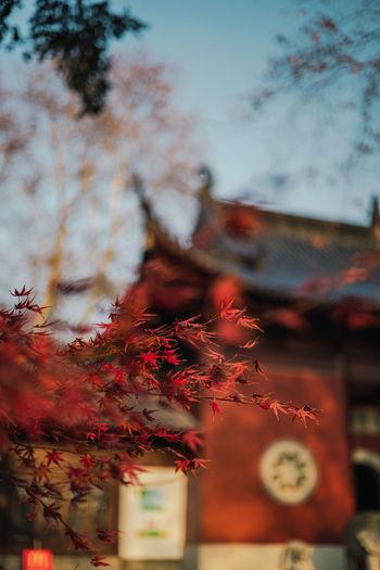 Autumn leaves on tree against sky