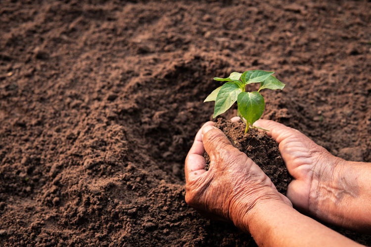 Human Hand Growth Nature Plant Gardening Outdoors Hand Leaf Beginnings Holding Seedling Planting Environment