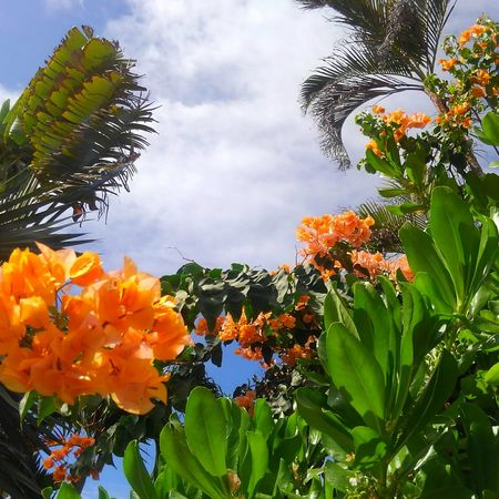 Beauty In Nature Flower Low Angle View Day EyeEm Gallery Eyem Gallery Happy Moments Taking Photographs CaptureTheMoment Honolulu, Hawaii Tropical Plants EyeEm Best Shots EyeEm Nature Lover Landscape_Collection Eye4photography  Nature_collection Aloha Happiness Flower Head Plant Orange Color