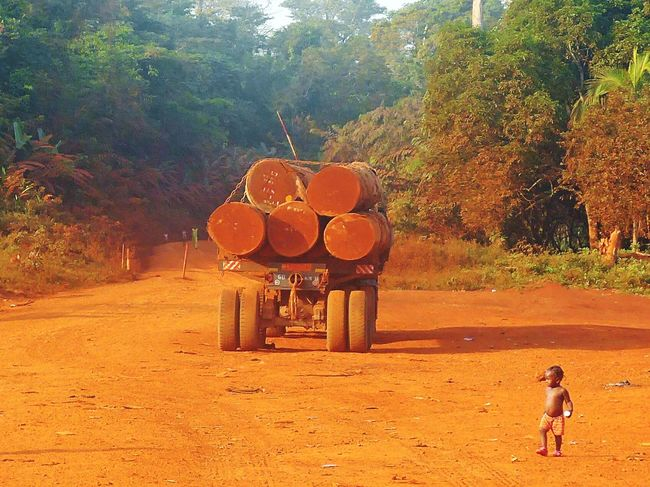 Tropical deforestation Cameroun Nature Rainforest Cameroon Africanamazing Africa African Streetphotography StreetScenes