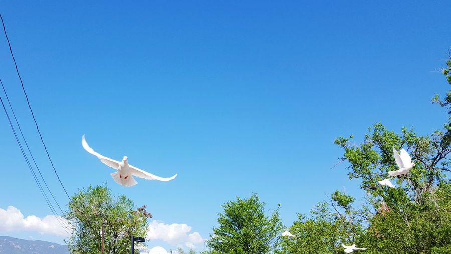 Animal Themes Bird Outdoors Nature People Dove Flying Doves, Birds Dove In The City Nature Bird Of Prey No People Clear Sky Spread Wings Day Blue Sky Flying Morning Tree The Traveler - 2018 EyeEm Awards