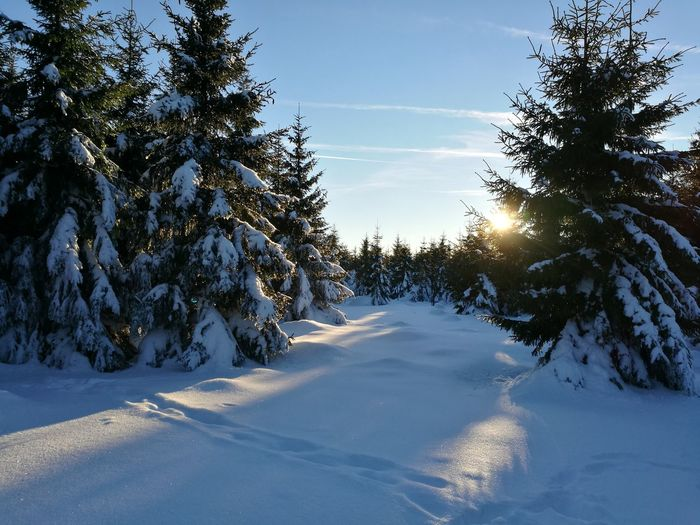 Tree Snow Blue