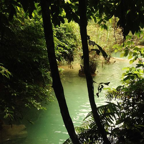 Forest waterfalls Forest Waterfalls Waterfall River Trees Nature Life Green Leaves Luangprabang