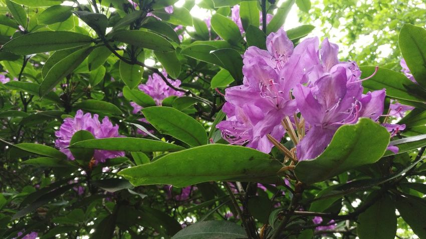 Flower Nature Beauty In Nature Purple Growth Pink Color Green Color No People Outdoors Leaf Day Fragility Plant Freshness Tree Flower Head Close-up