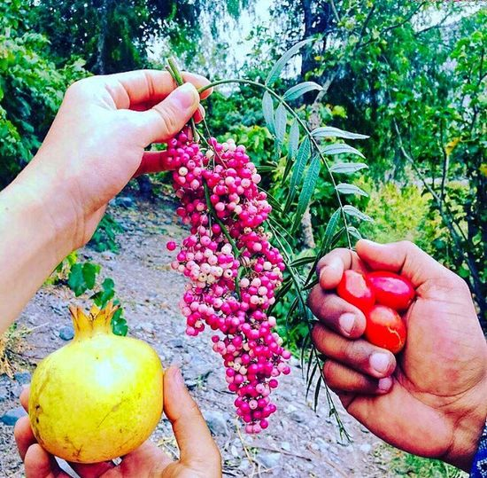 Frutos de Lunahuaná Fruit Valley Lunahuana Human Hand Hand Human Body Part Food Freshness Food And Drink Holding Plant Healthy Eating Nature