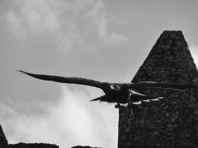 Sky One Animal Flying Spread Wings Low Angle View Animal Themes Cloud - Sky No People Animals In The Wild Bird Of Prey Day Outdoors Welcome To Black Black And White Friday