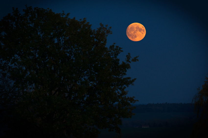 Moon Full Moon Night Astronomy Tree Nature Sky Space Star - Space Beauty In Nature No People Beach Outdoors Landscape Galaxy Constellation Water Milky Way Moon Surface Cloud - Sky Altenburg Natural Phenomenon Thuringia Autumn Beauty In Nature
