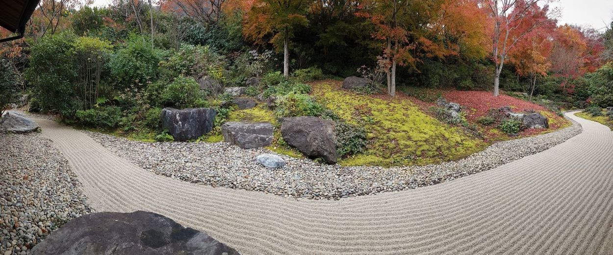 Plant Tree Nature No People Day Tranquility Growth Autumn Solid Tranquil Scene Rock Land Beauty In Nature Rock - Object Change Outdoors Scenics - Nature Sand Green Color Gravel