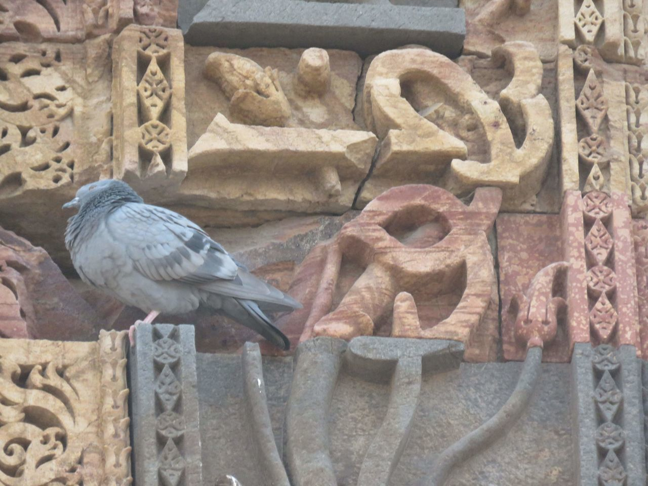 bird, animal themes, perching, close-up, no people, one animal, built structure, day, outdoors, animals in the wild, architecture