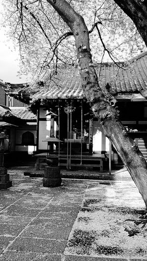 Architecture Built Structure Tree House Sky Town No People Monochrome Photography Shrine Culture Cerryblossom