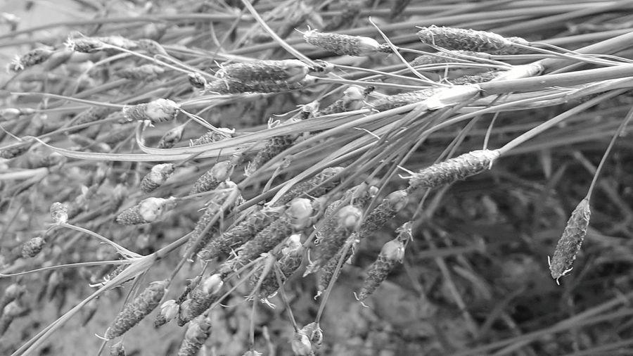 Beach Grass Black & White Sunny Day Summer Black And White Friday