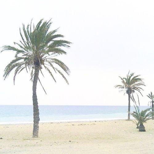 Playa Relax Sun Palma Mar Olas Arena Sun Brisa Olores Fresco Nice Cute Momentos ⛅☁🌴❌