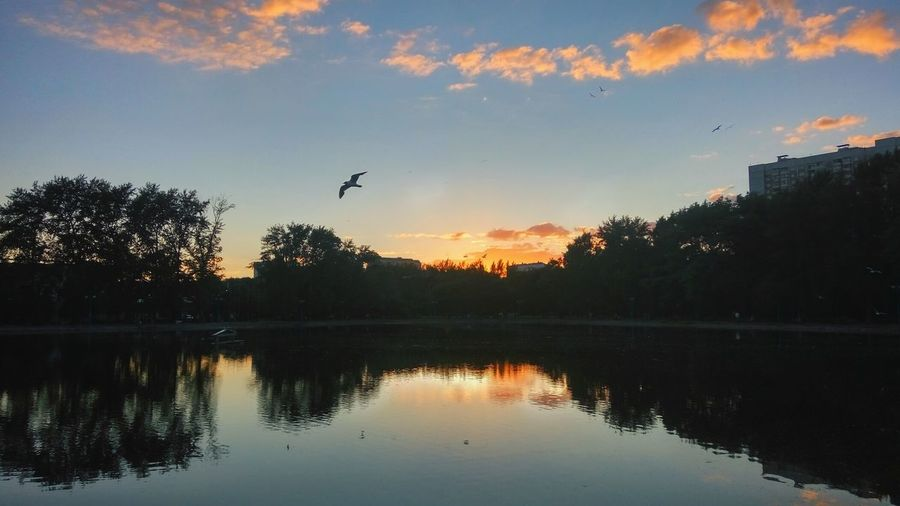 Sunset Flying Reflection Lake Silhouette Bird Tree Sky Water Animal Wildlife Nature Dusk Animals In The Wild Outdoors Scenics No People Travel Destinations Beauty In Nature Day Animal Themes