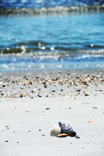 EyeEm Selects The Week On EyeEm Sunshineandgoodtimes #seashells SandyBeach