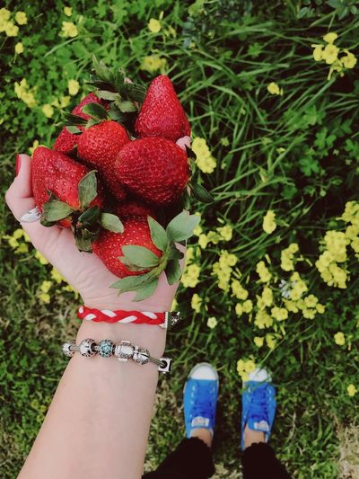 Hand full of strawberries Grass Green Spring Flowers Springtime Spring Strawberries Strawberry One Person Plant Human Body Part Real People Women Day Nature Standing Lifestyles Shoe Red Freshness Leisure Activity Holding Outdoors