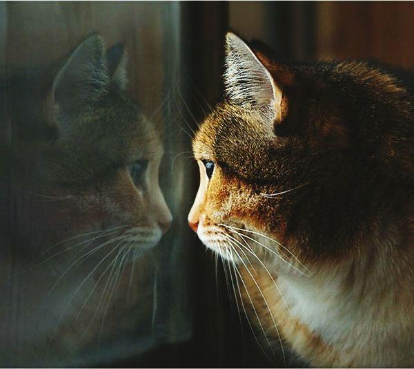 Lonely Cat