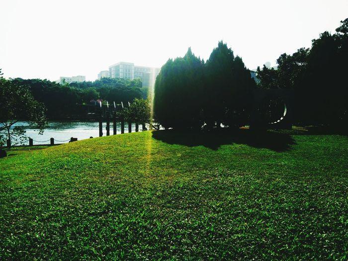 Bamboo Lake Lake Campus Life Grass Green View Tree Growth