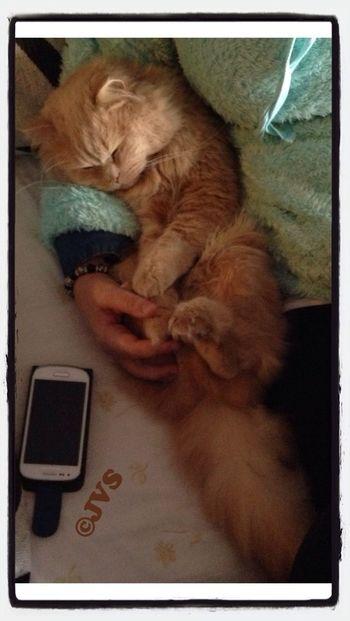 Una buena siesta...