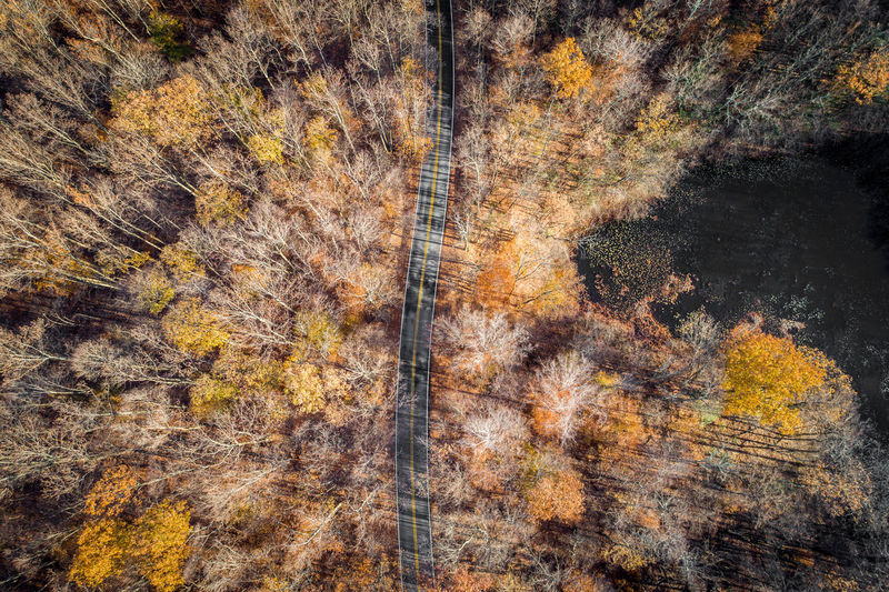 Drone  Drones Backgrounds Day Dji Drone Photography Dronephotography Droneshot Forest Forest Fire Multi Colored Nature No People Outdoors Pine Tree Plant Part Tree Wilderness Area Yellow