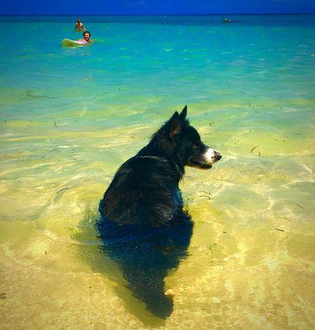 Things I Like Photooftheday Picoftheday Summer Beach #sun #nature #water #TagsForLikes.com #TagsForLikesApp #TFLers #ocean #lake #instagood #photooftheday #beautiful #sky #clouds #cloudporn #fun #pretty #sand #reflection #amazing #beauty #beautiful #shore #waterfoam #seashore #waves #wave