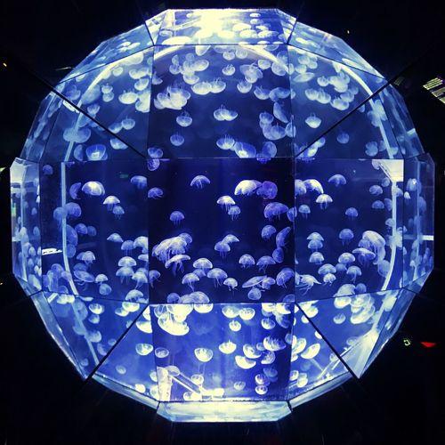 Pattern Blue Lighting Equipment No People Illuminated Close-up Indoors  Black Background Day jellyfish