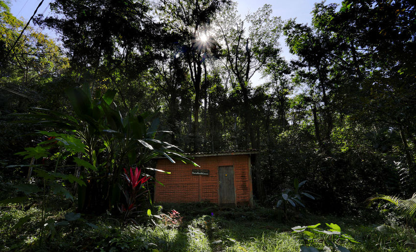 Ancient Architecture Brazil Forest Photography House In The Forest Little House Pau A Pique Quilombo Serra Do Mar Ubatuba