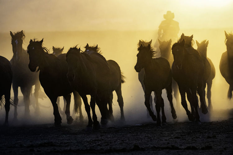 Panoramic view of horses on field during sunset