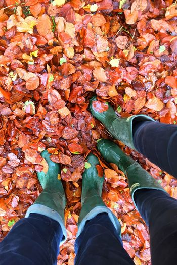 Low section of people wearing rubber boots standing on wet autumn leaves