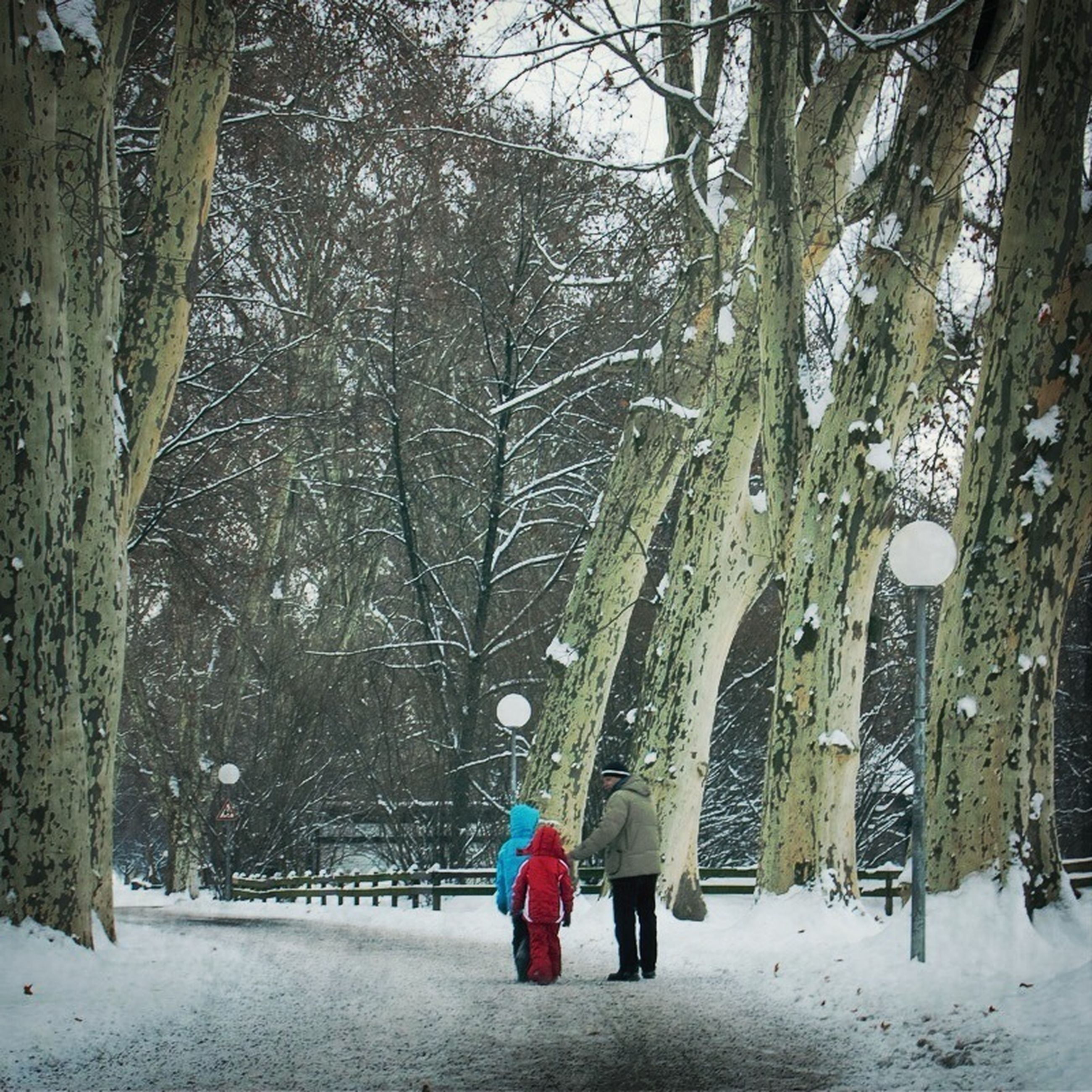 snow, winter, cold temperature, season, weather, tree, covering, bare tree, frozen, white color, covered, the way forward, tree trunk, nature, branch, street, road, snowing, outdoors, snow covered