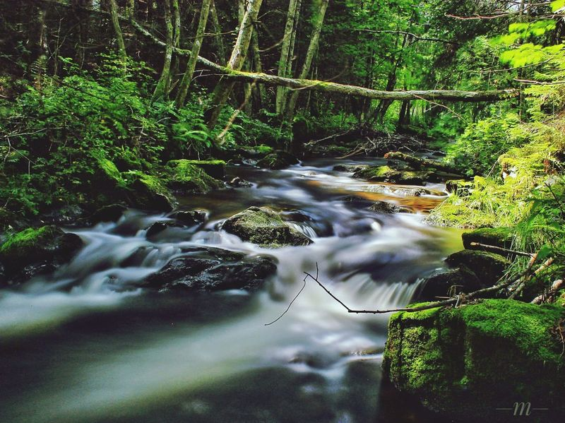 Water Nature Outdoors No People Day Forest Tree Moss Idyllic Schwarzwald Bachlauf River Fluss Forest Photography Langzeitbelichtung EyeEmNewHere