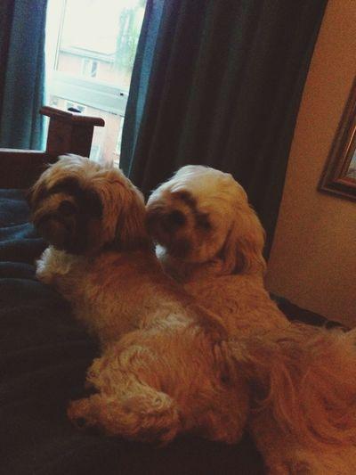 Dogs Cute