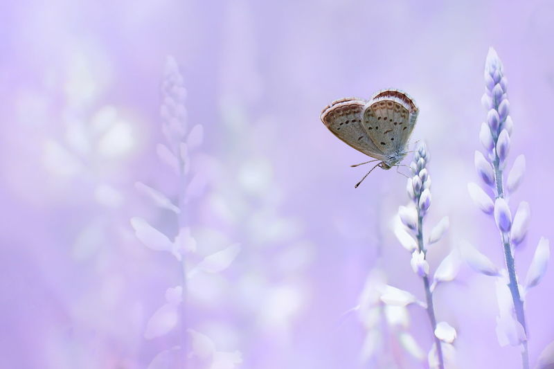 Insect One Animal Butterfly - Insect Animal Wildlife Purple Animal Themes Fragility Nature Animals In The Wild Flower Close-up No People Plant Day Outdoors Beauty In Nature Perching Freshness Sky
