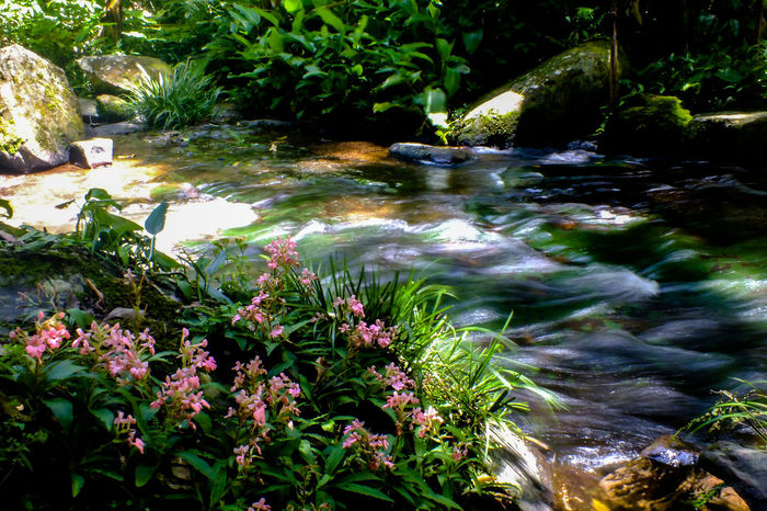Stream2 Nature Water Plant Beauty In Nature Outdoors No People Tranquil Scene Tranquility Flower Day Growth Sunlight Grass Landscape Tree Nature Reserve Pink Color Snapdragon Wild Flowers EyeEmNewHere The Week On EyeEm Travel Destinations Beauty In Nature Forest Beauty Been There.