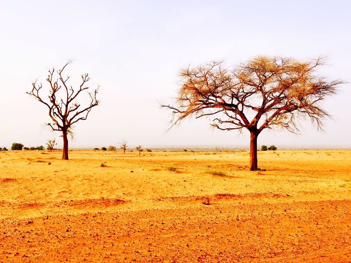 Deserts Around The World Just outside the capital of Niamey before going deeper into the tenere desert.