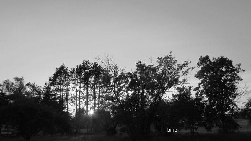 Taking A Walk Late Evening Sky Around My Neighborhood No People Silhouette Sun Peeking Through The Trees Black And White Photography Cadillac Michigan