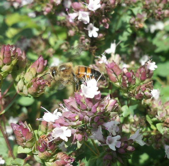 bee... Bee
