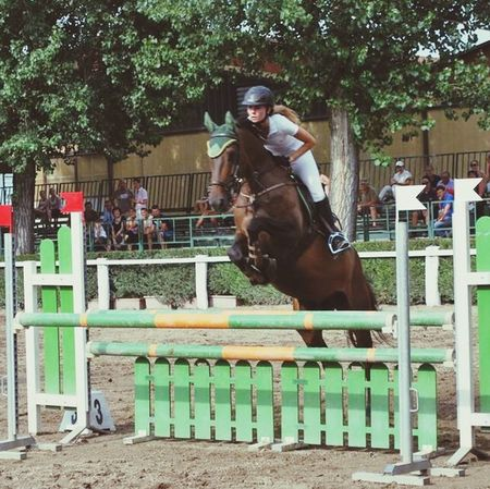 Horses Competition Showjumping Love