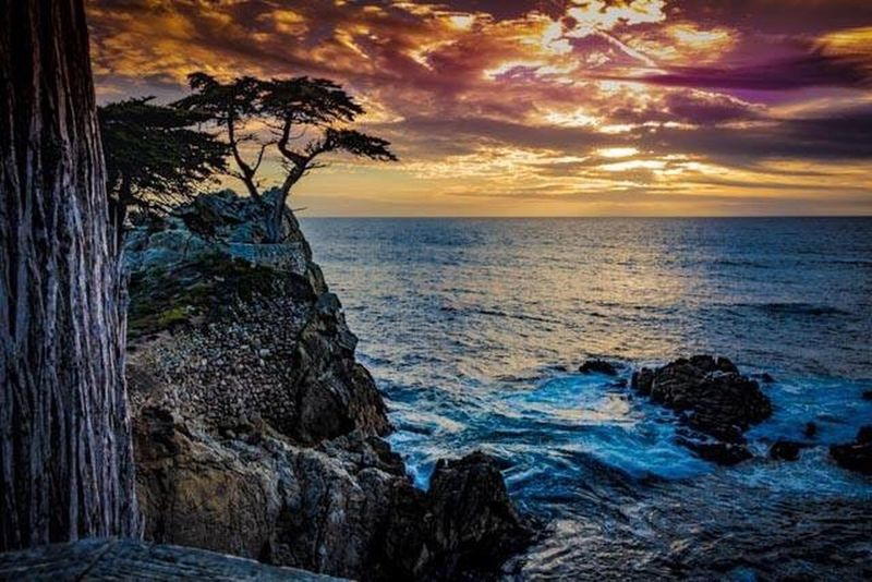 The Lone Cypress at Pebble Beach Sea Sunset Beach Scenics Dramatic Sky Horizon Over Water Rock - Object Beauty In Nature Coastline Beauty Outdoors Landscape No People Nature Cloud - Sky Tree Sky Postcard Lone Tree Lone Cypress Pebble Beach California Sunset California