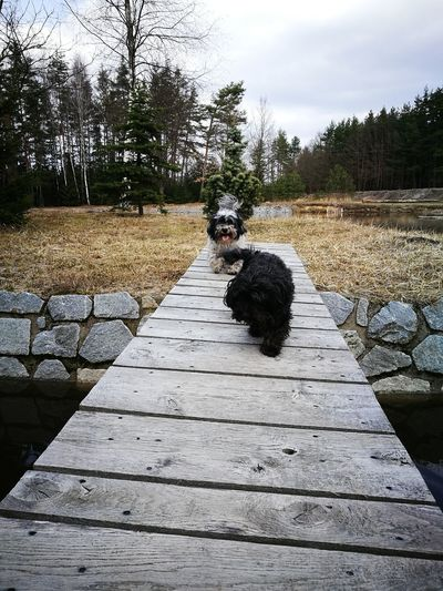 Dog❤ No People Wood Bridge Animal Photography