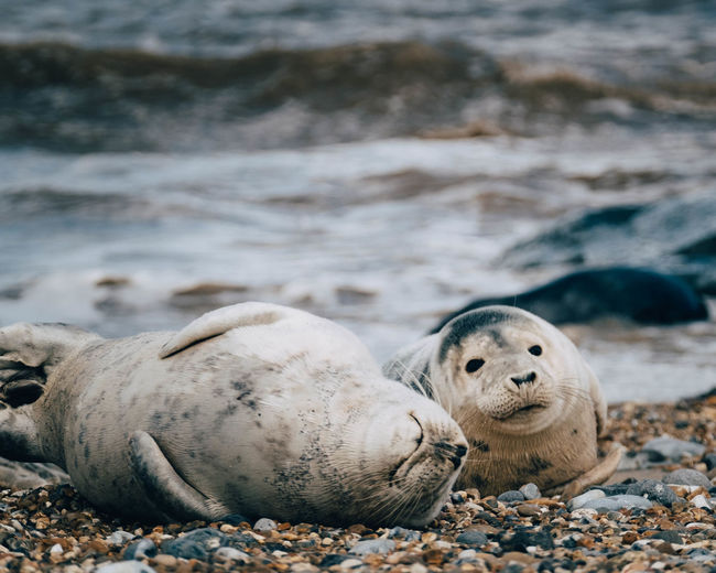 View of seals on beach